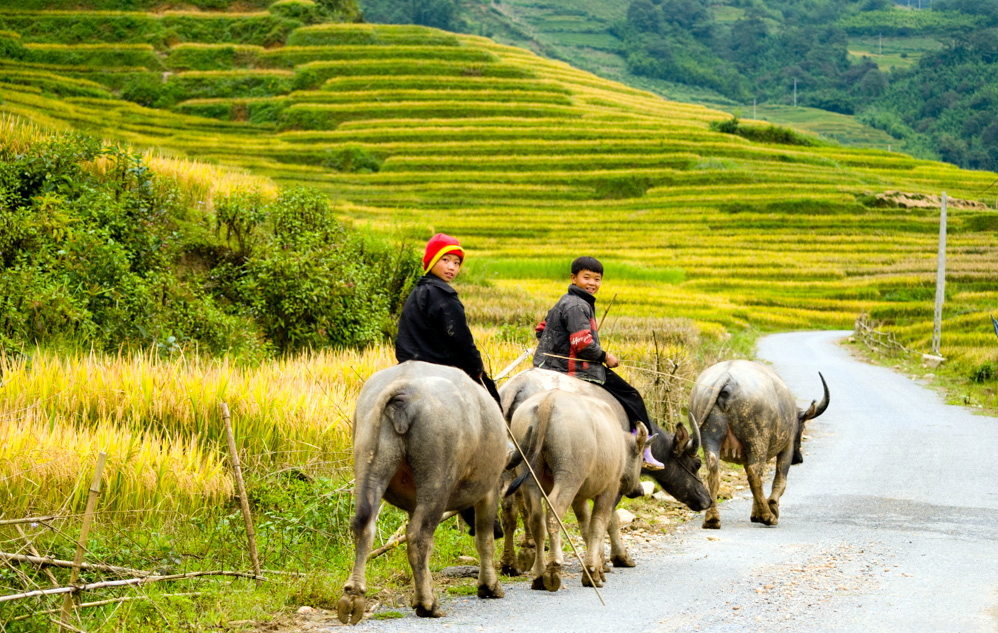 SAPA ADVENTURE / 4NIGHT 3DAYS BY TRAIN/ HOTEL-HOMESTAY